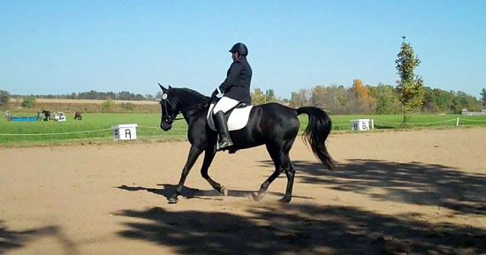 Gaited dressage horse cantering